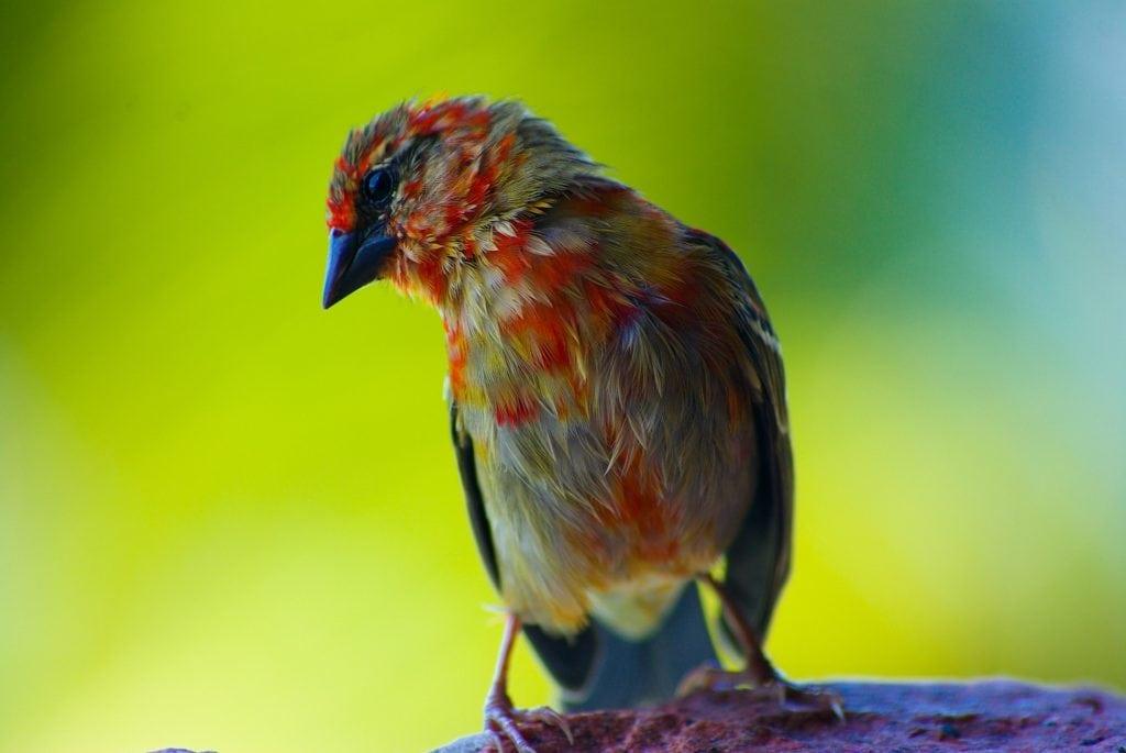 bird 679369 1920 1024x685 - Парусный спорт на Сейшельских островах - Что ожидать